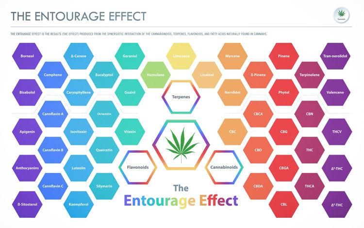 Was bedeutet der Entourage Effekt?